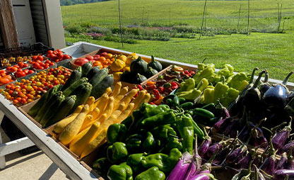 fresh vegetable on table in barn