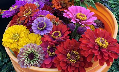 bucket-of-fresh-flowers-from-blue-gables-farm